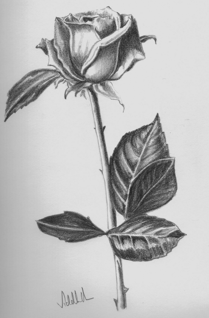 Drawn red rose glass vase Drawing In Rose Love Rose
