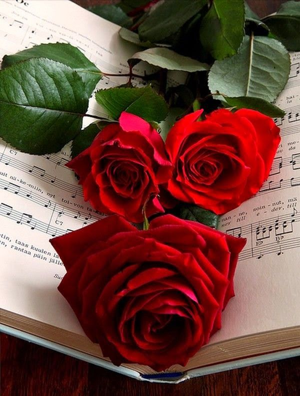 Drawn red rose monochromatic Por Pinterest on música Red
