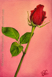 Drawn red rose monochromatic Oil » fine by realistic