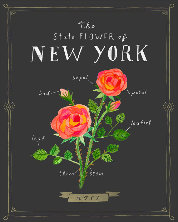 Drawn red rose new york state York New New Rose Print