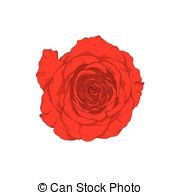 Drawn red rose one Of hand drawn graphic white