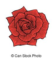 Drawn red rose one Drawn of Rose red One