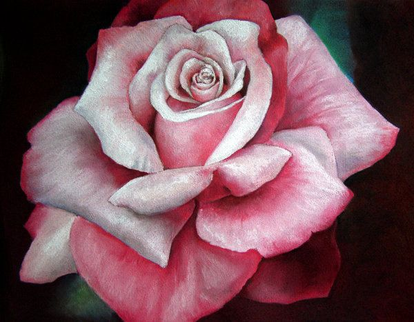 Drawn rose pastel drawing On Pastel pastel Search Google