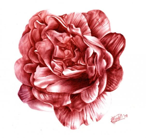 Drawn red rose pen drawing в red with by Лучших
