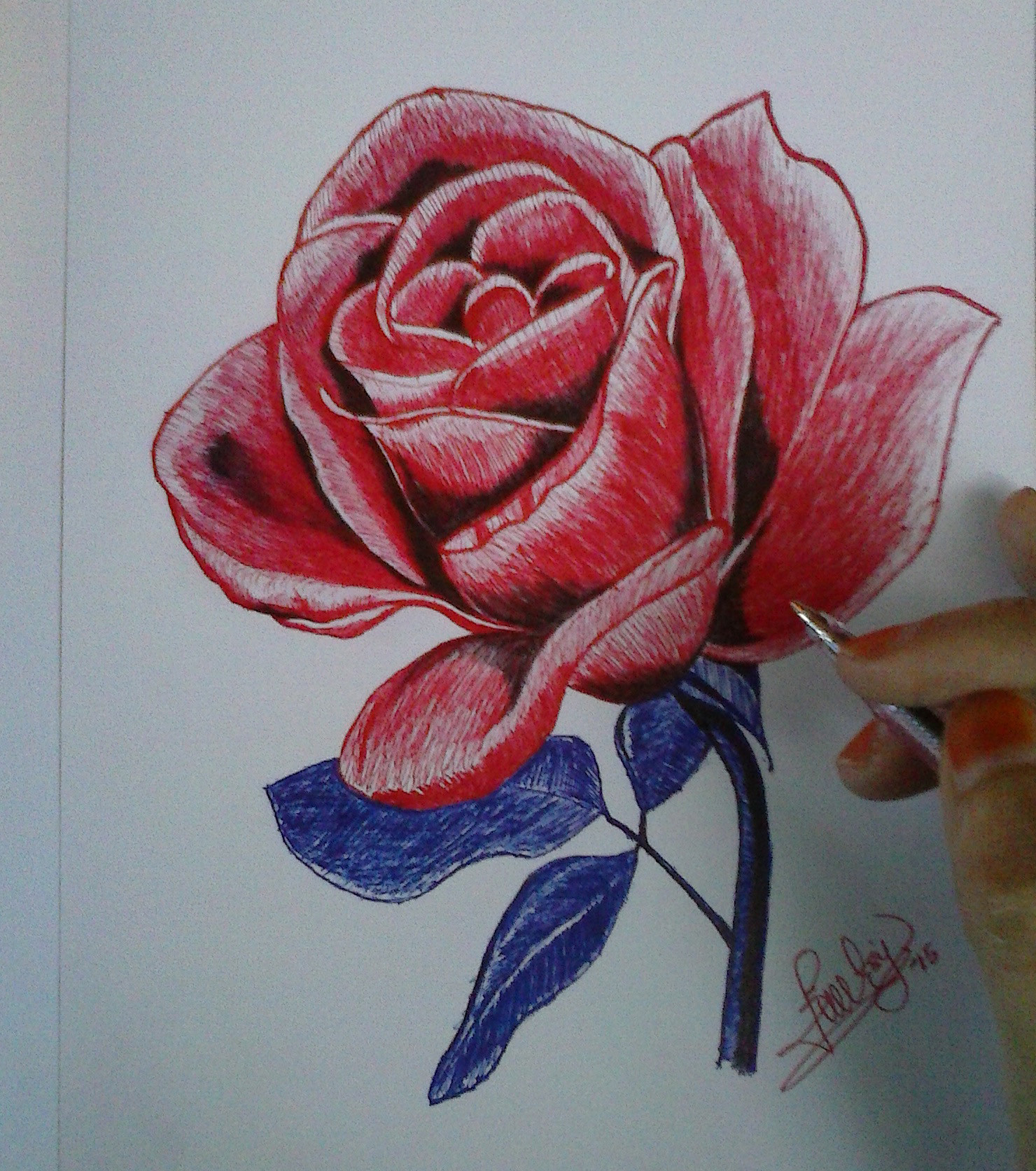 Drawn red rose pen drawing Rose Red Black Images And