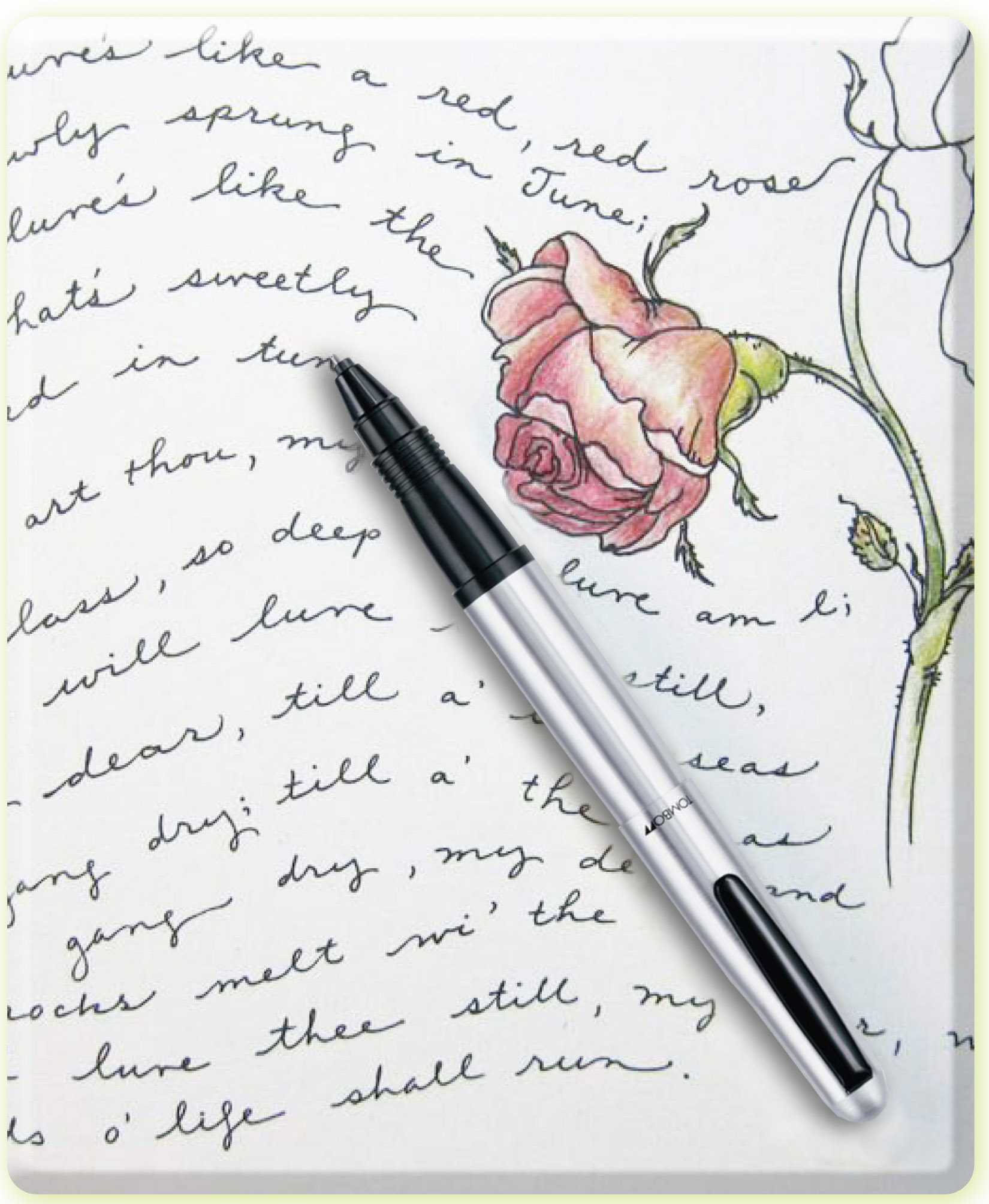 Drawn red rose pen drawing Part Robert to Browning Color