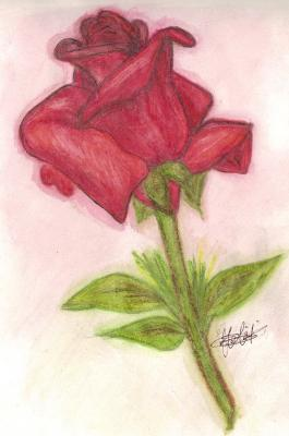 Drawn red rose pen drawing Rose  A Red