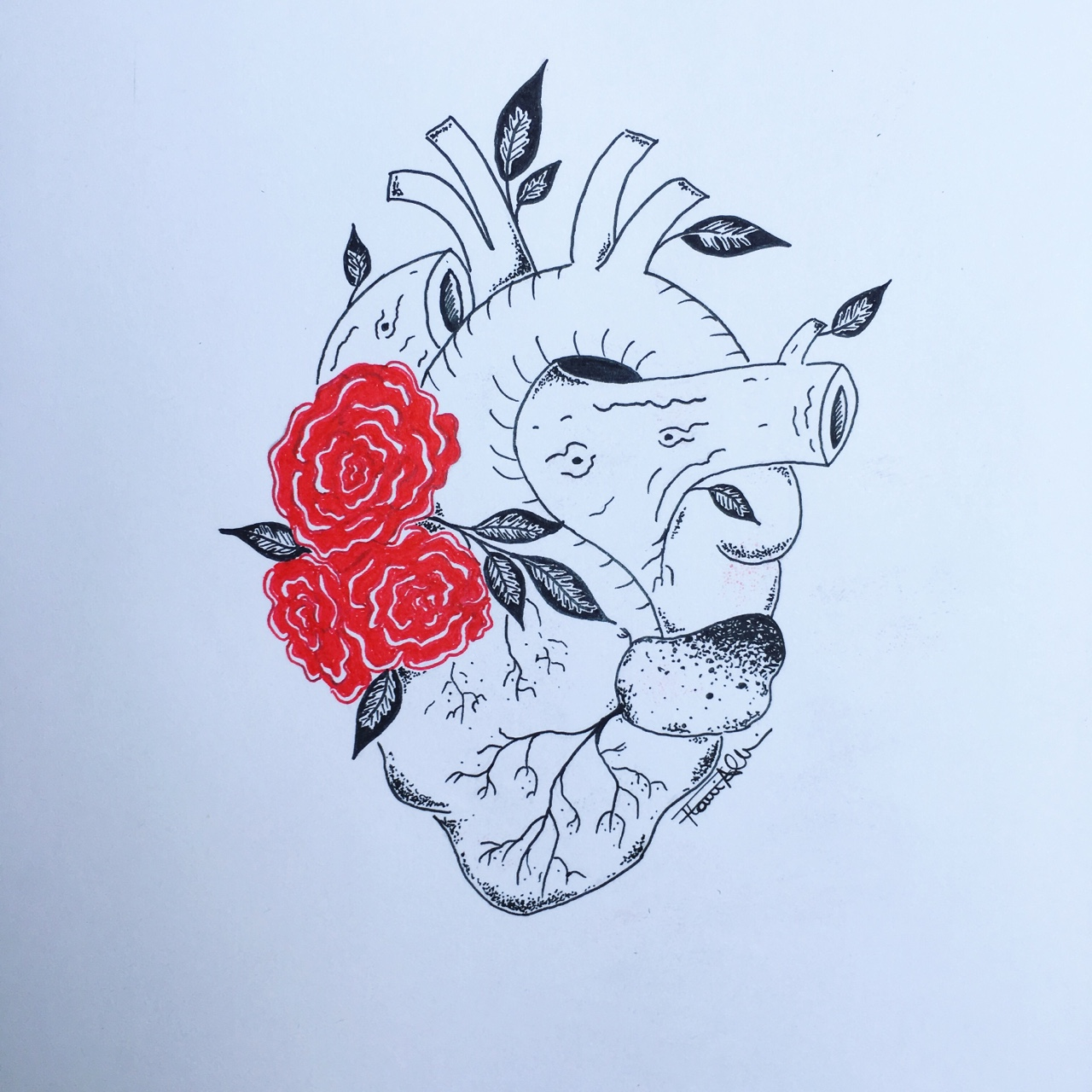 Drawn red rose pen drawing On flowers pen All hand