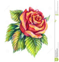 Drawn red rose pencil crayon  by fatboygotsick drawings Google