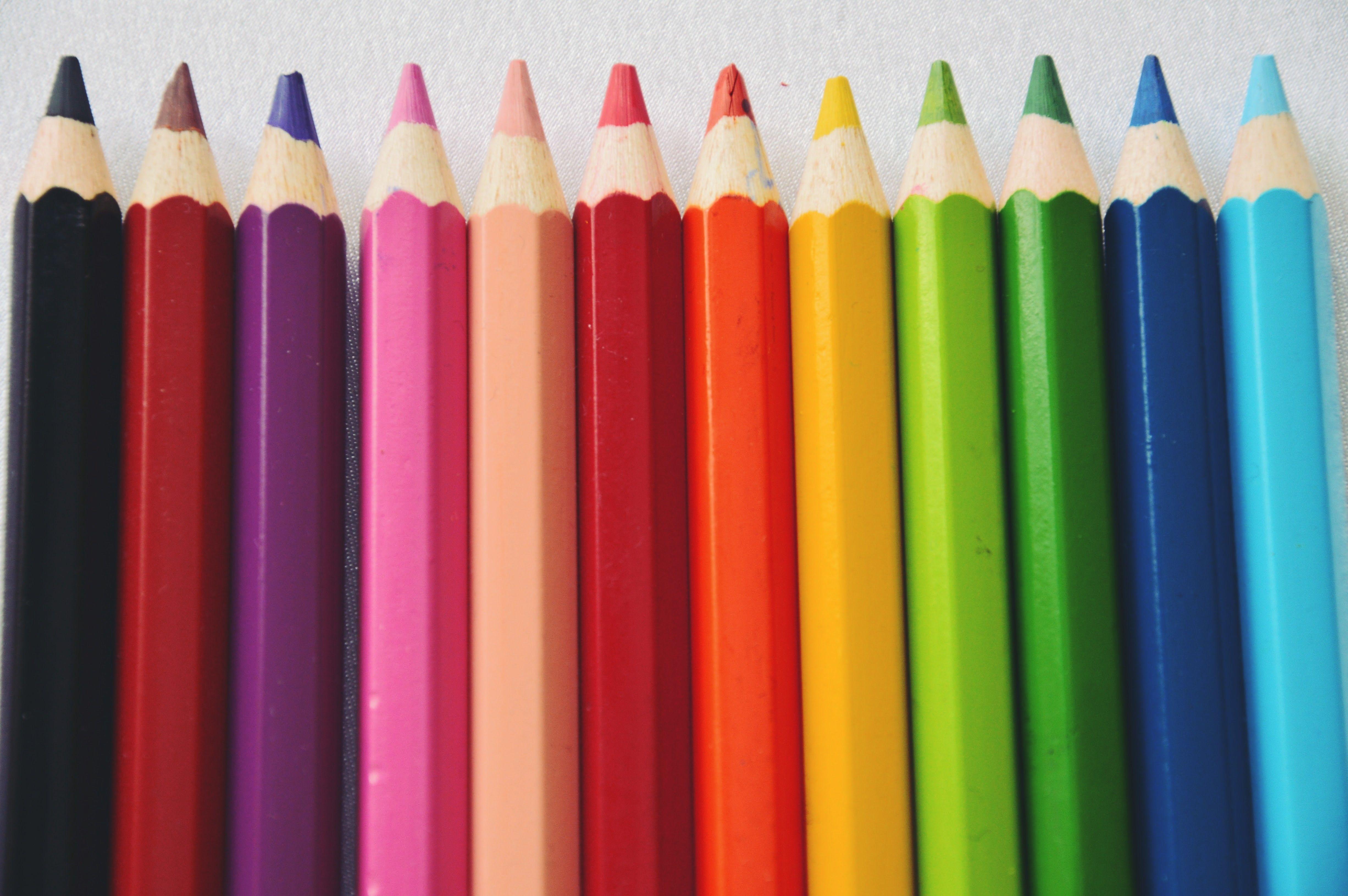 Drawn red rose pencil crayon Tip Blending Pencil  Drawing