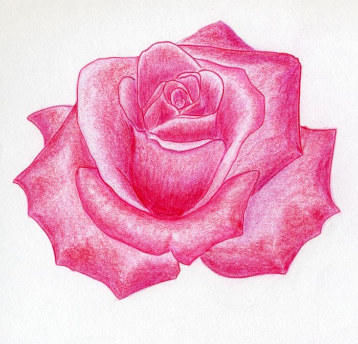 Drawn rose real rose Flower real Rose rose With
