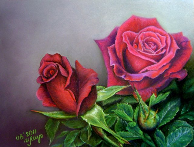 Drawn red rose pencil crayon Around Drawings 11 from 25