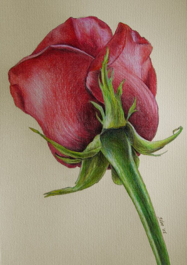 Drawn red rose pencil shading  on ideas Best 25+