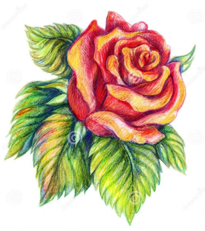 Drawn rose simple realism Drawings and 25+ flower Flower