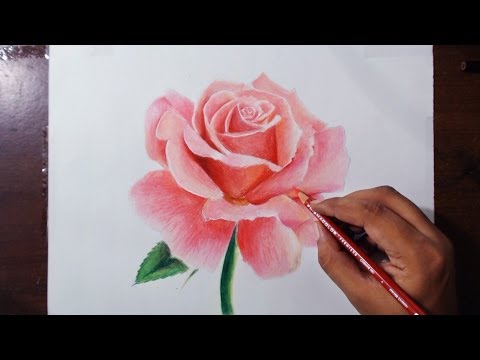 Drawn red rose pencil shading Drawing 1 Prismacolor 1 series