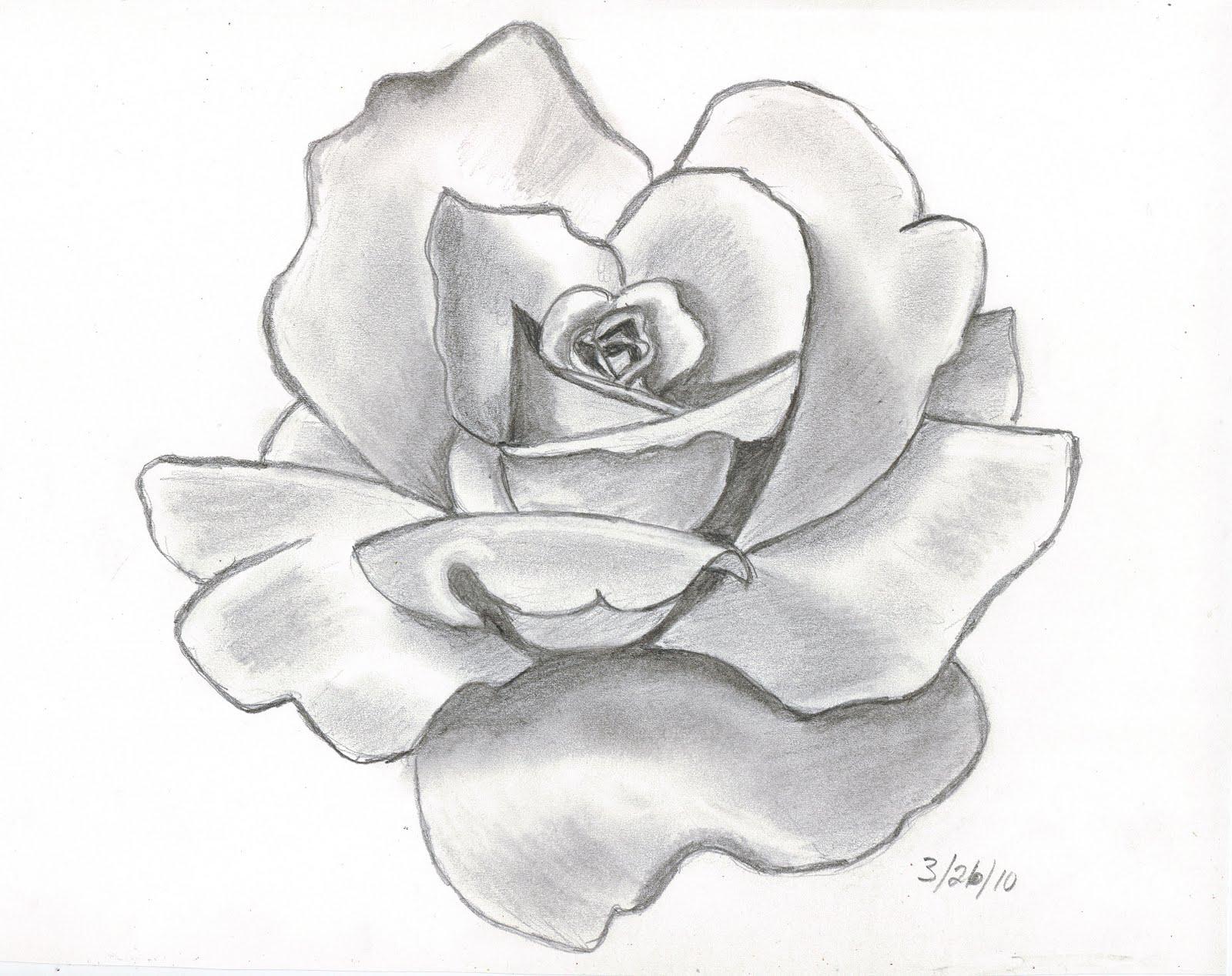 Drawn pencil drawing Pencil tattoo drawings rose Sketches
