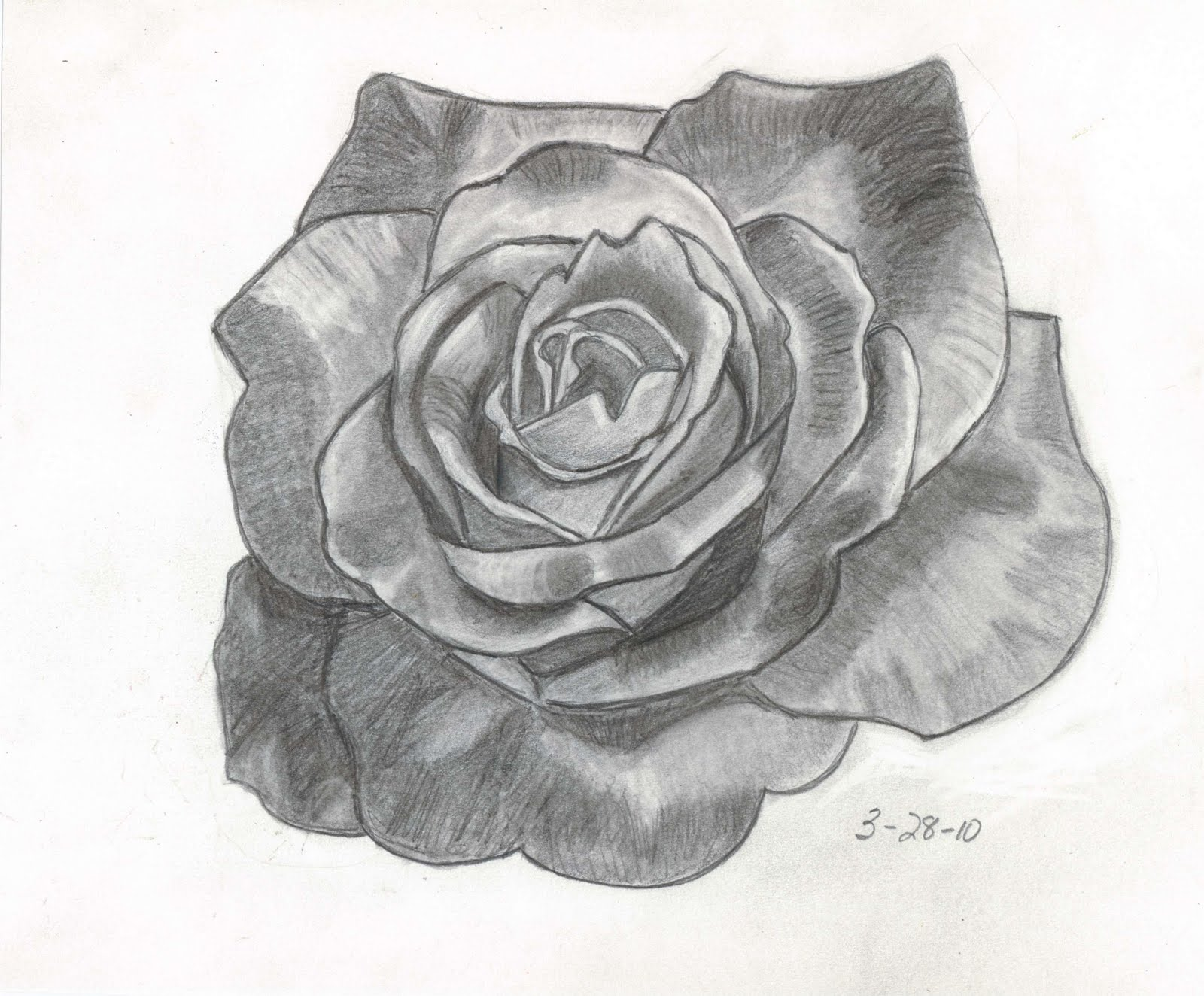 Drawn red rose pencil shading Rose  Image Best Shading