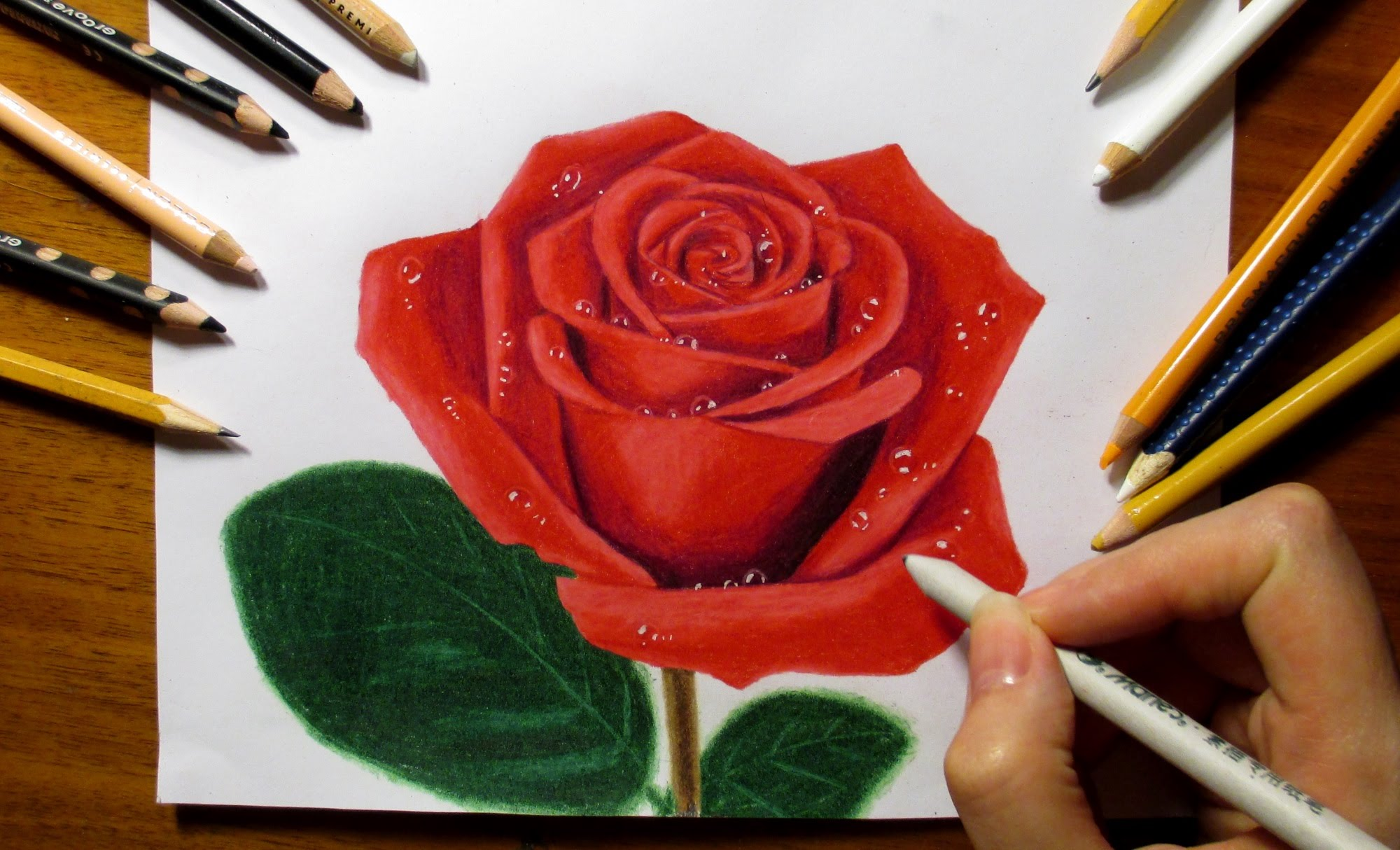 Drawn rose colorful flower With Pencils Rose Colored Colored