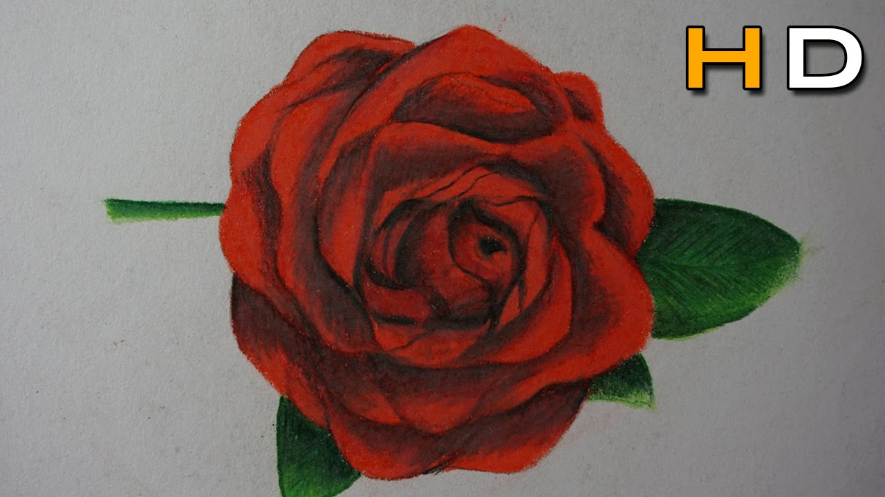 Drawn red rose pencil step Colored Rose Step to Timelapse