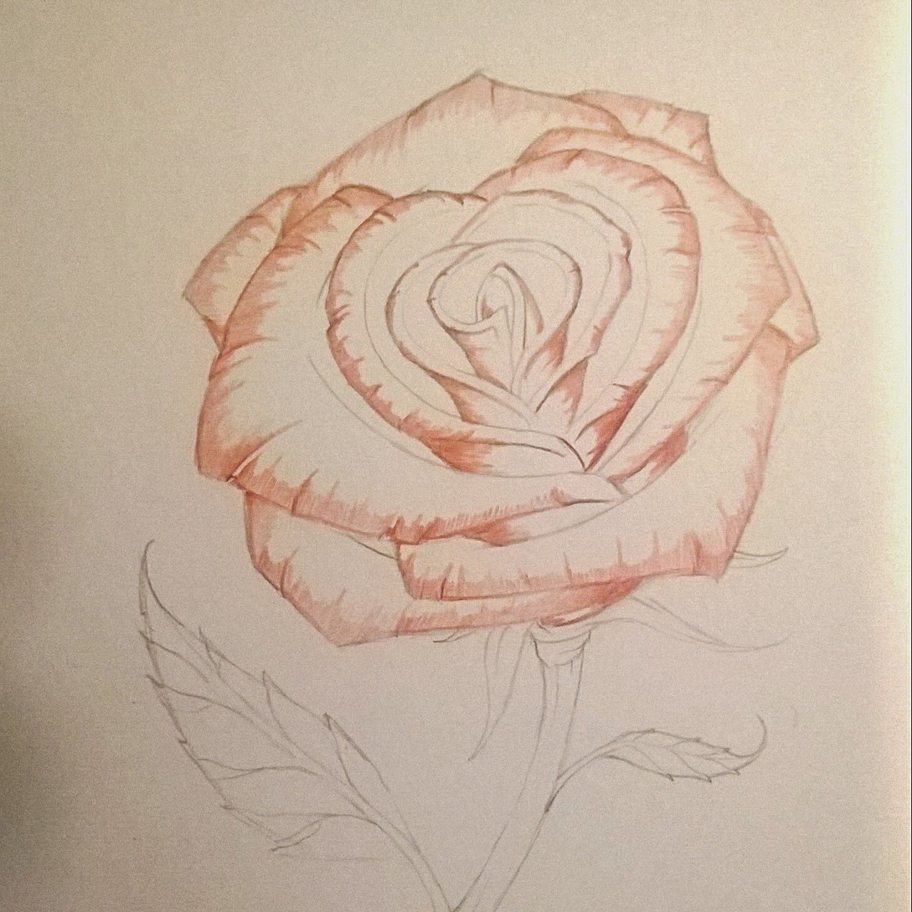 Drawn red rose pencil step How Pencils the lovely Brown