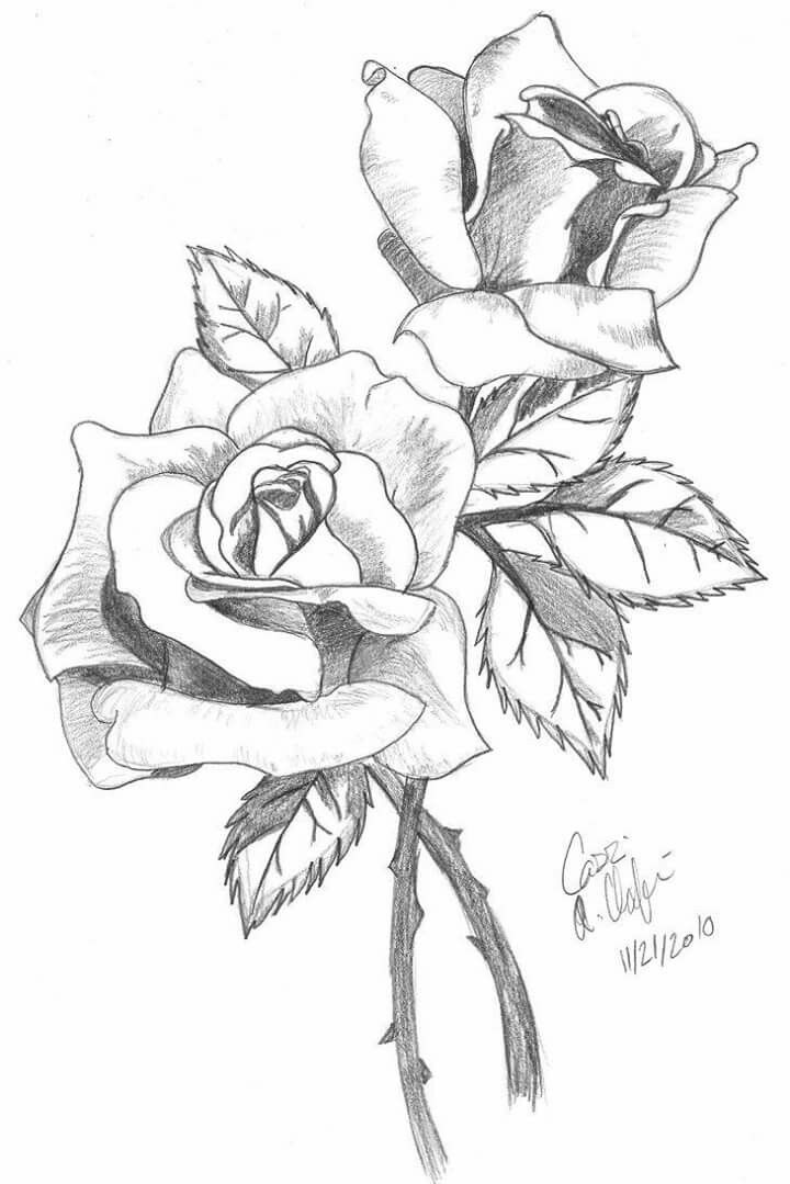 Drawn red rose pencil step Flower Pinterest Best this and