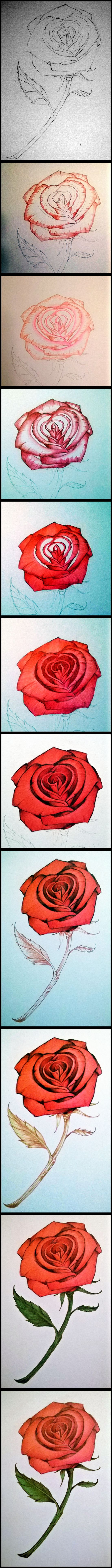 Drawn red rose pencil step With on Pencils to Flowers
