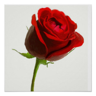 Drawn red rose pink rose Rose Canvas Painting Zazzle Oil