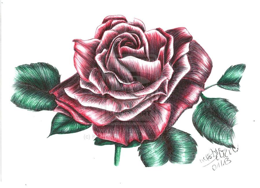 Drawn red rose pink rose Drawings Sketch Red by