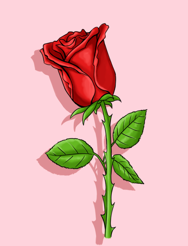 Drawn red rose pink rose Images Rose Simple hoontoidly: Drawing