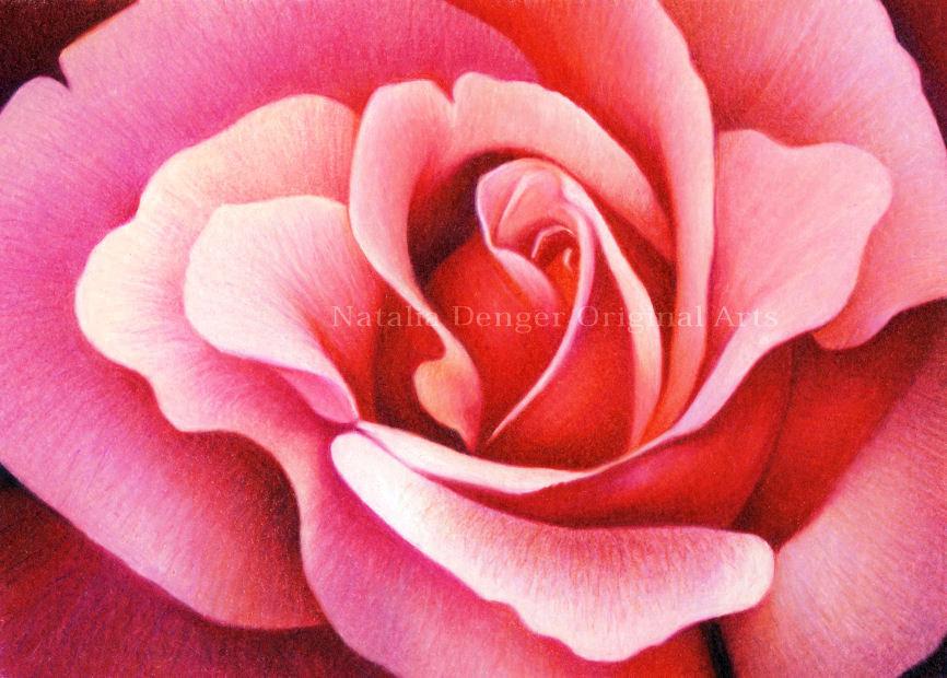 Drawn red rose pink rose Flower Red Drawing ORIGINAL Rose