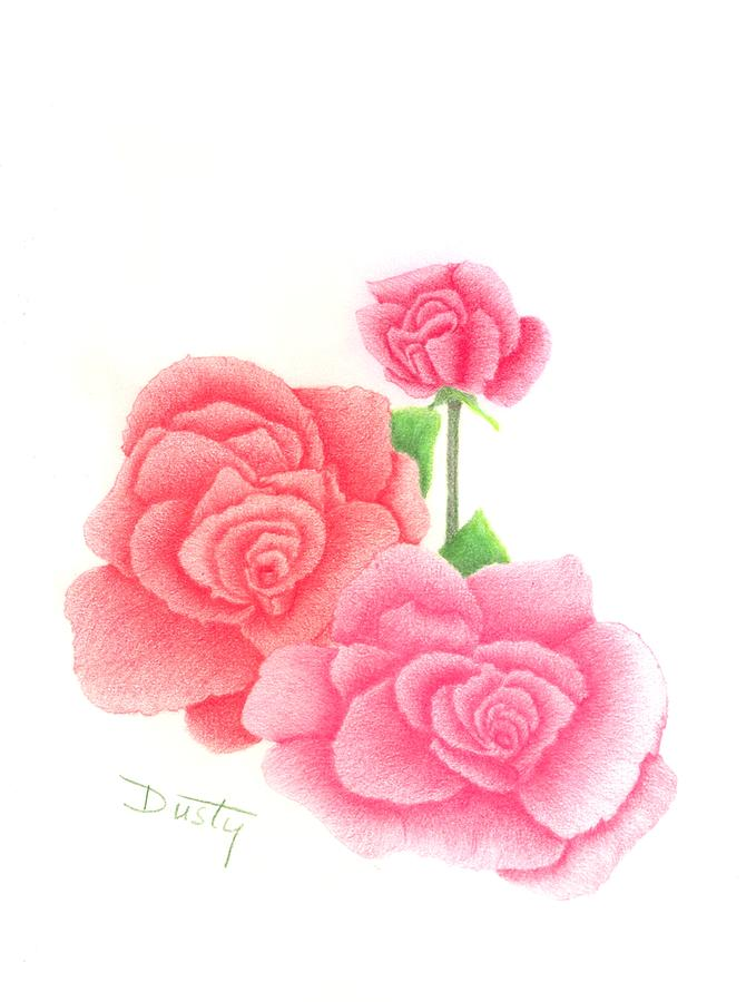 Drawn red rose pink rose By Trio Dusty Roses Dusty