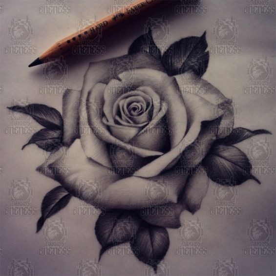 Drawn rose real rose Them as Want I the