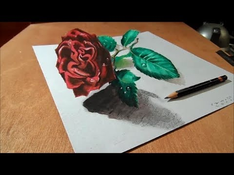 Drawn rose real rose 3D 3D Drawing Artistic on