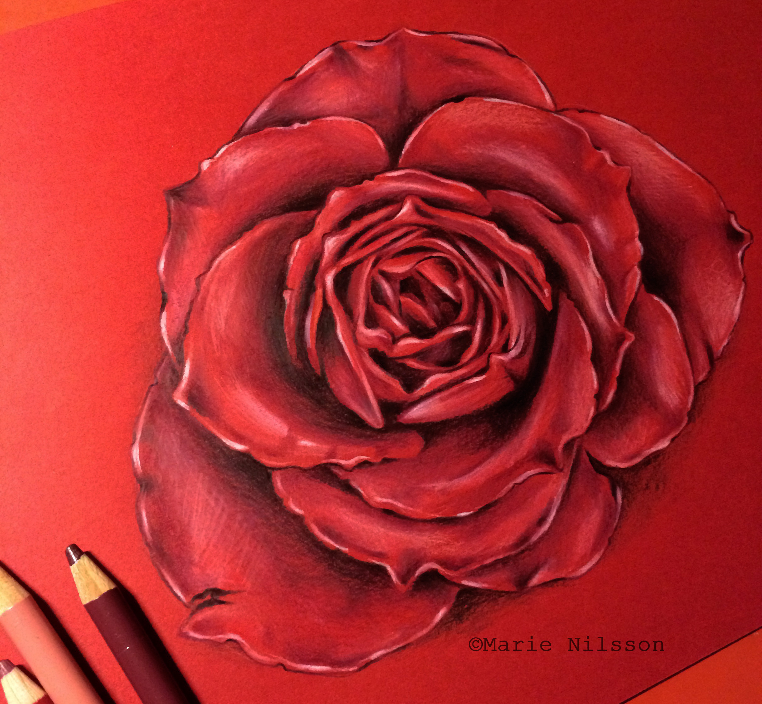 Drawn red rose realistic Study rose deviantart com rose