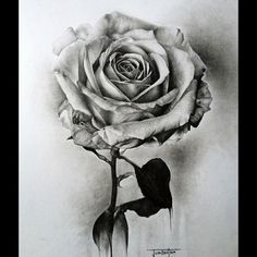 Drawn red rose realistic White # rose #art and
