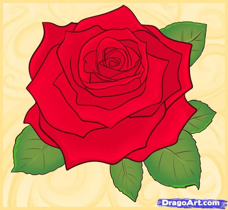 Drawn red rose ribbon drawing To Real Rose Roses How