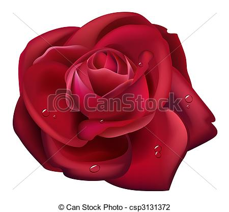 Drawn red rose rosa Rose red Illustration  Rose