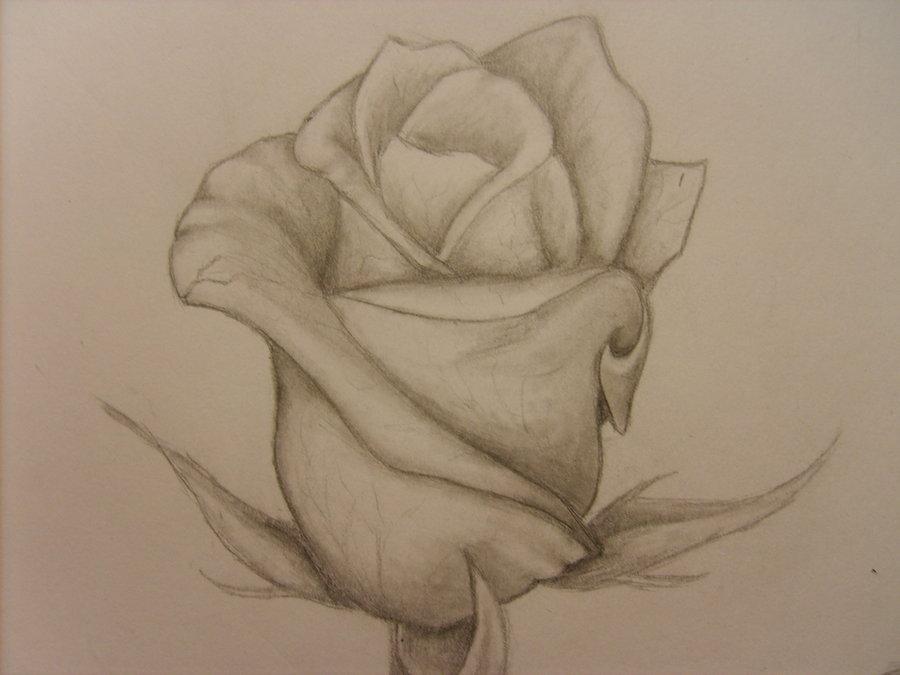 Drawn rose rose bud Rose Rose bud cool Bud