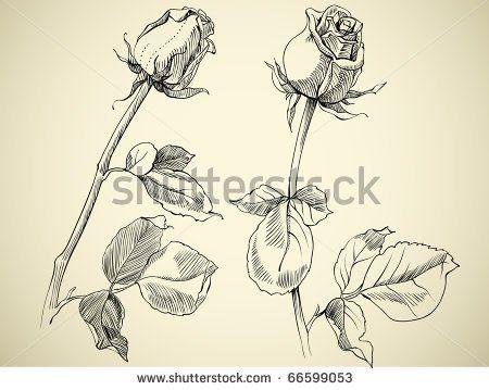 Drawn red rose rose bud Sketches Best Tattoo tattoo ideas