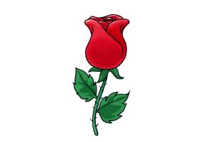 Drawn red rose rose bud A Rose Draw Draw a