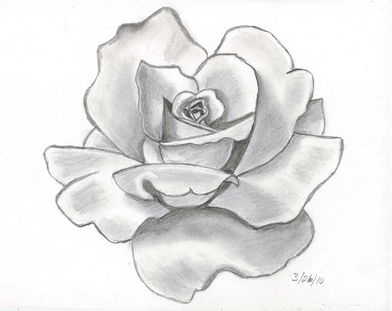 Drawn red rose shaded I drawing my Pencil been