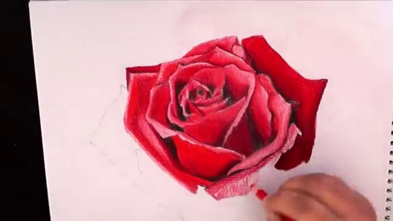 Drawn rose pencil crayon Drawing with pencil with YouTube