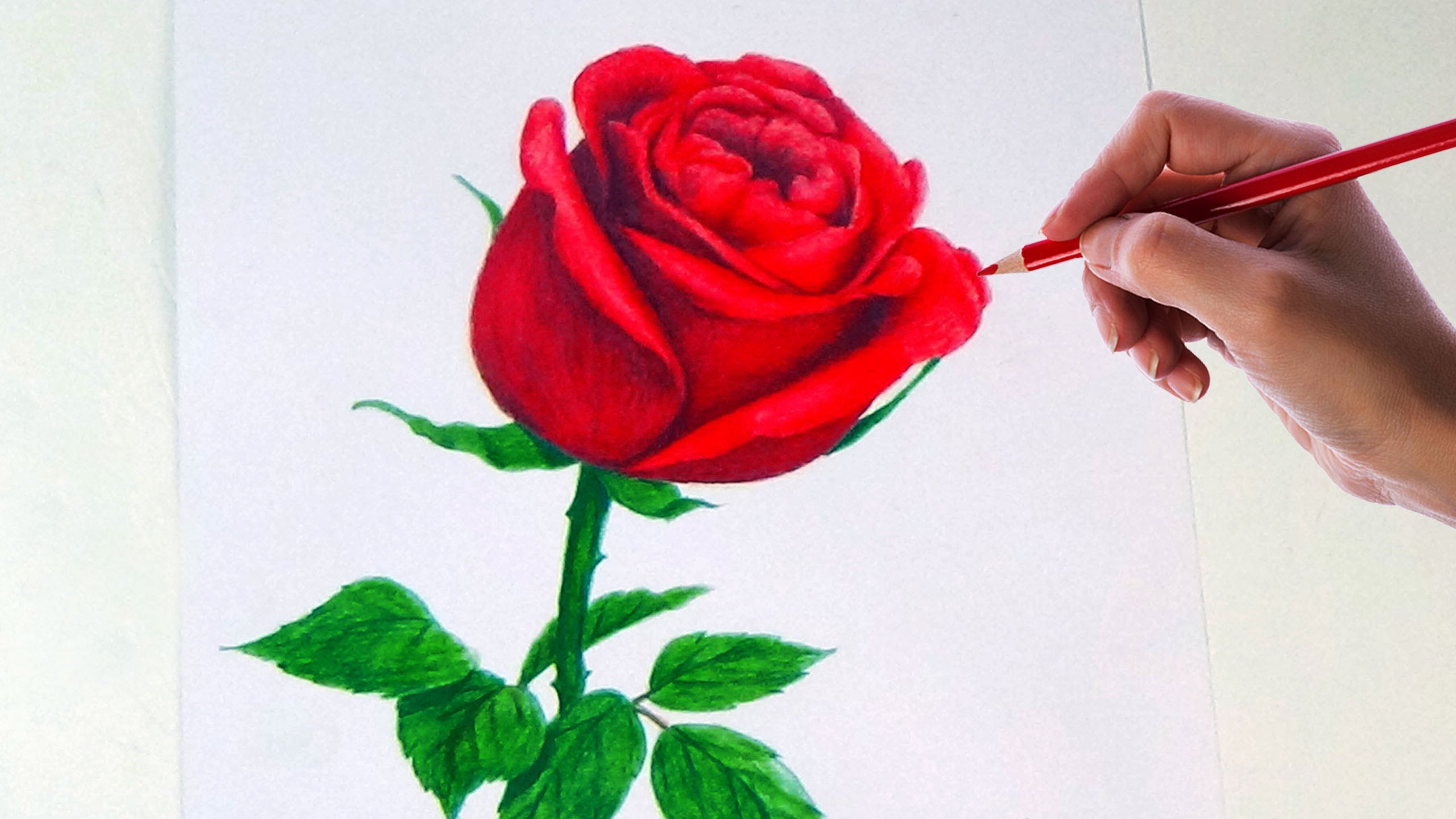Drawn red rose shaded Colored Rose Rose YouTube Drawing