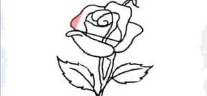 Drawn red rose sketch Beginners for Draw «