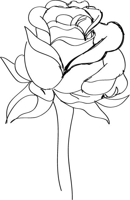 Drawn red rose sketch Rose:  a Draw Red