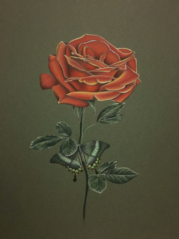 Drawn red rose sketch Of Download Photorealistic Format 20+