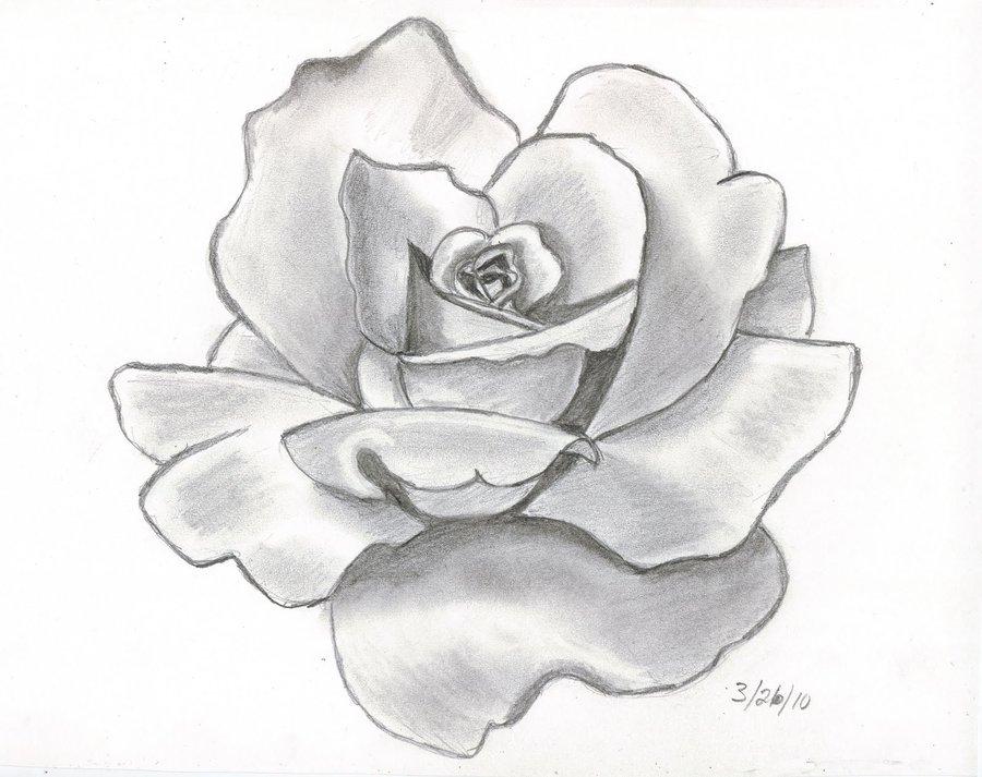 Drawn red rose sketch Rose  Red Helpful PIEMUNCHER22