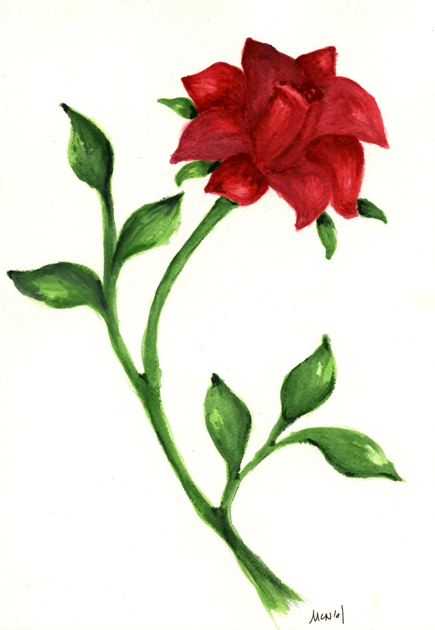 Drawn red rose sketch Drawing Red Rose Red Sketch