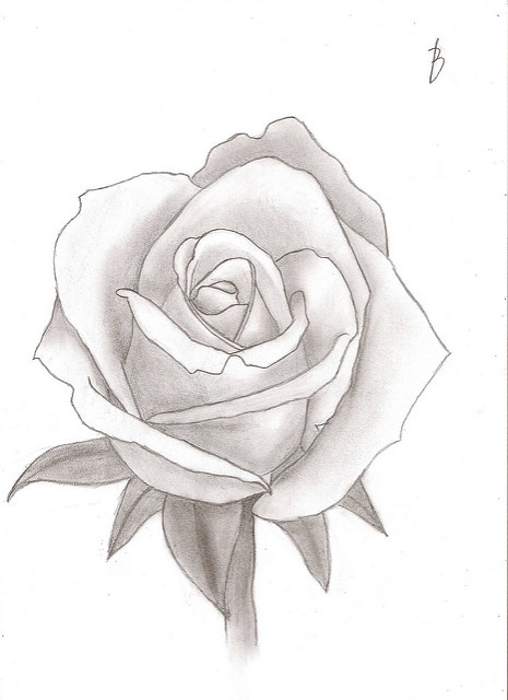Drawn red rose sketch  Drawing Flickr