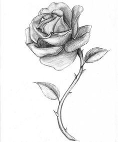 Drawn red rose small / / draw sketches Of